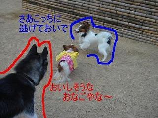 ティナちゃん.jpg