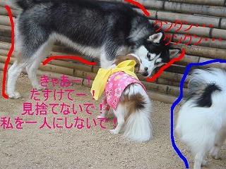 ティナちゃん2.jpg
